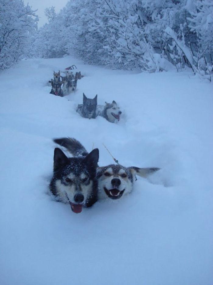 Psy i śnieg