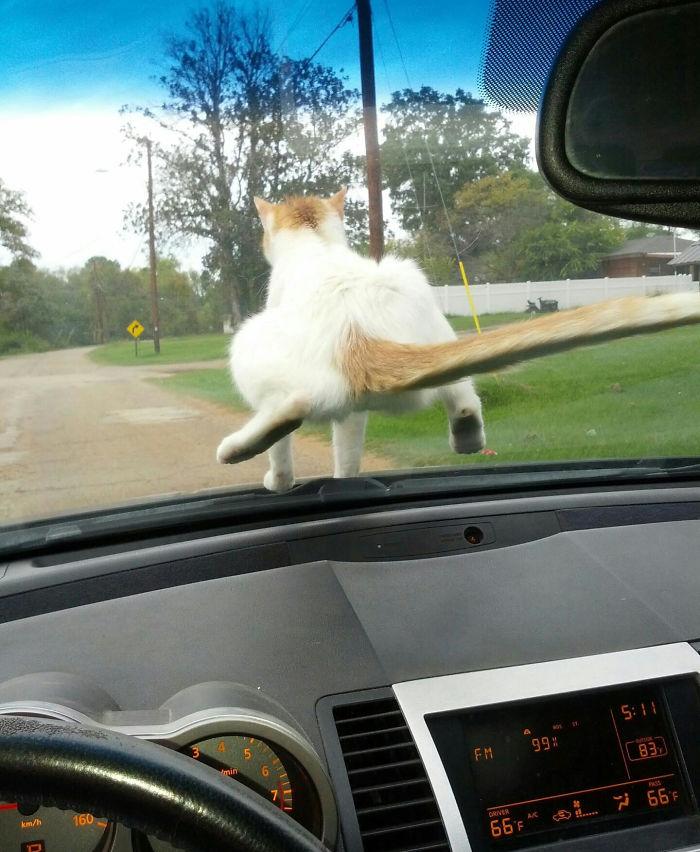 Kot na szybie