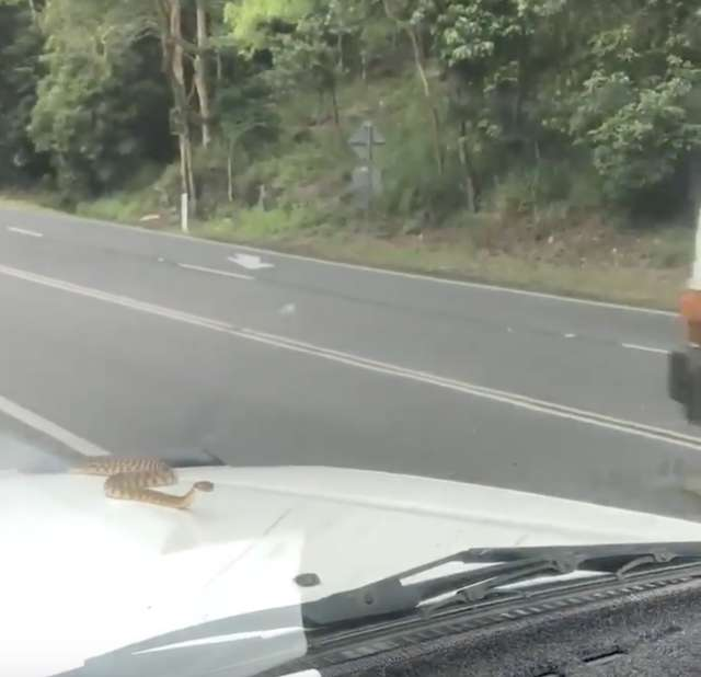 Wąż na samochodzie
