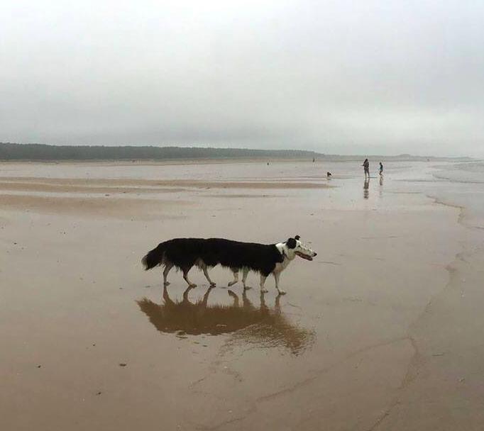 25 zdjęć psów, które okazały się być największym niewypałem