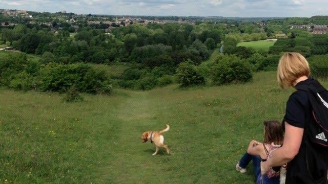 Śmieszne zdjęcie panoramiczne psa