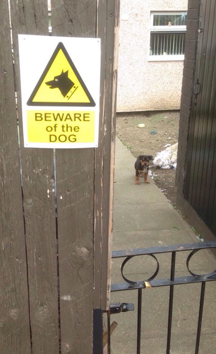 30 bardzo niebezpiecznych psów, które mają bronić posesji. Strach się bać!