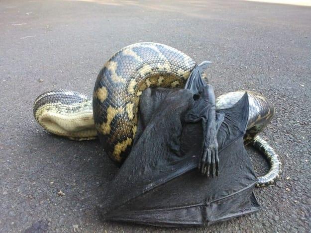 Wąż je