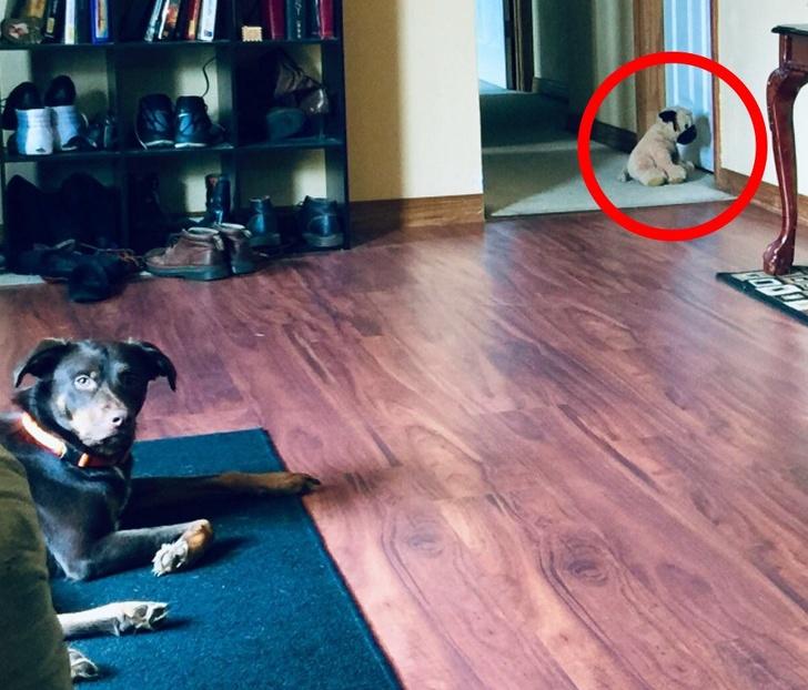 20+ zdjęć udowadniających, że psy posiadają swoją własną logikę