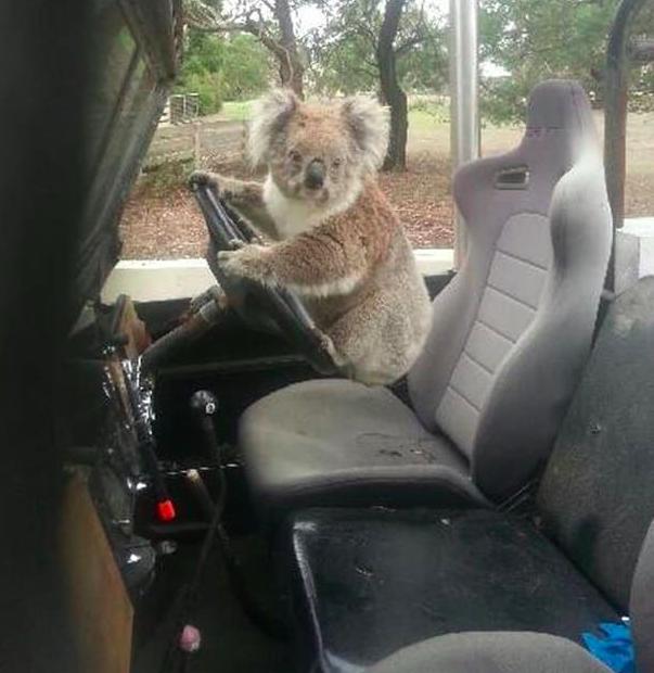 21 zdjęć, które pokazują, że Australia to najstraszniejsze miejsce na Ziemi