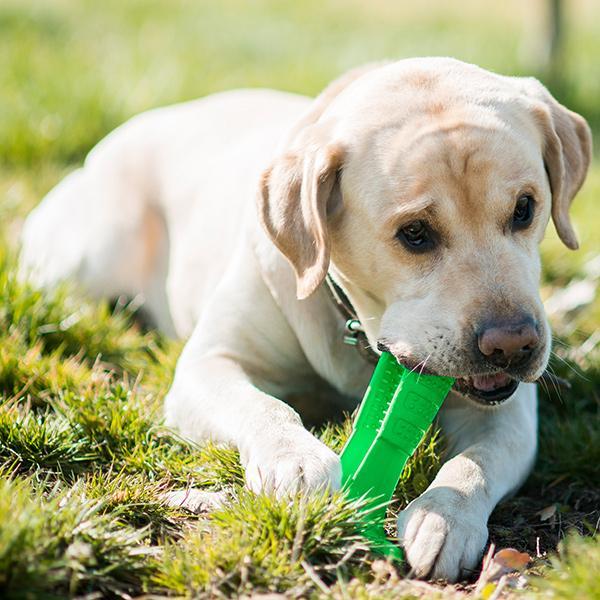 Dzięki tej zabawce pies samodzielnie wyczyści swoje zęby. Efekty widoczne już po 7 dniach!