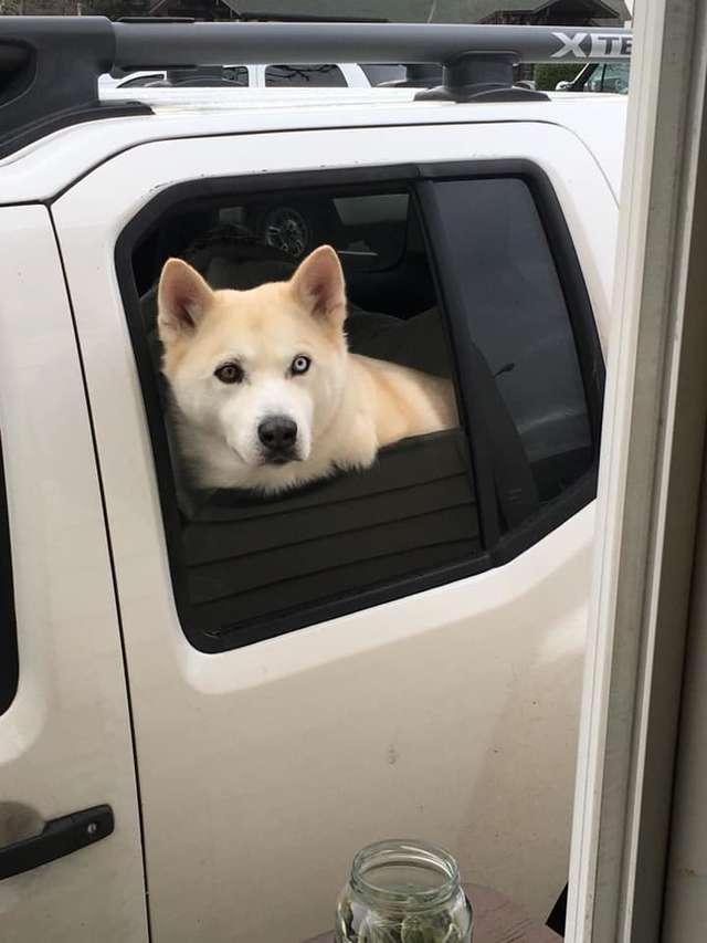 Pracownica kawiarni robi zdjęcie każdemu psu, który podjeżdża do okienka. Tacy klienci to skarb