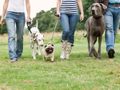 Zalety posiadania psa, spacer z psami
