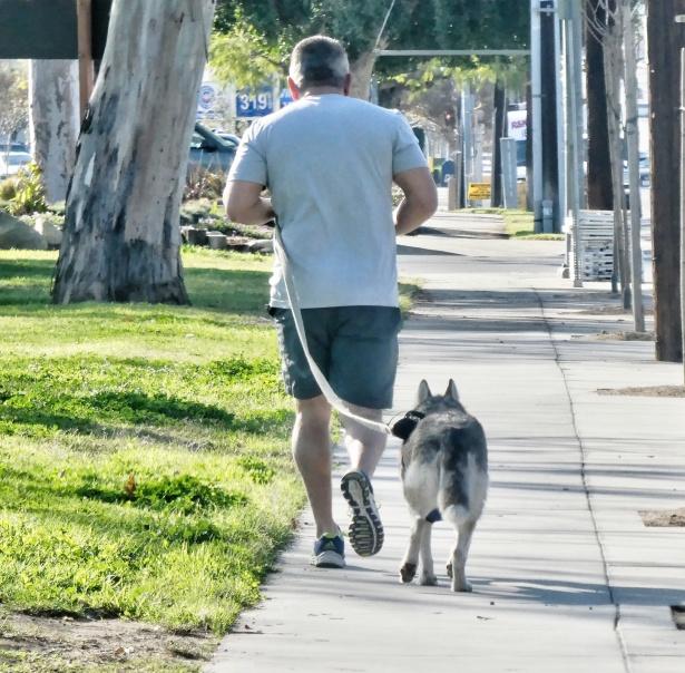 Zalety posiadania psa, bieganie z psem
