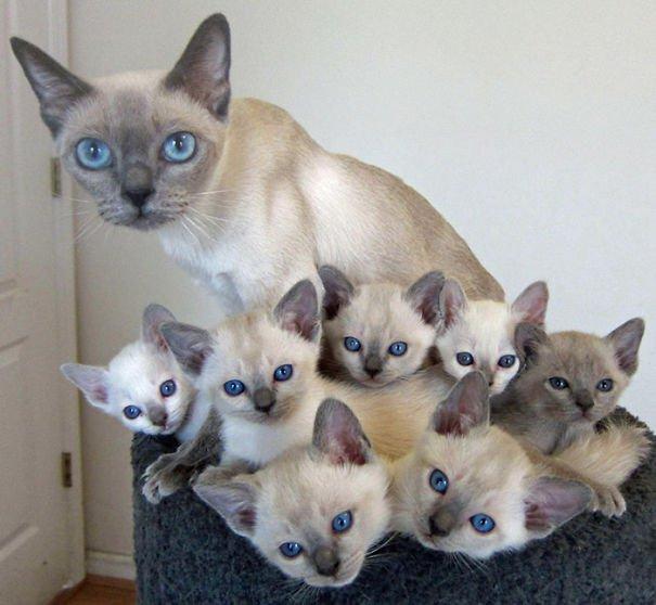 20 kocich mam i ich słodkich maleństw. Te zdjęcia roztapiają serce