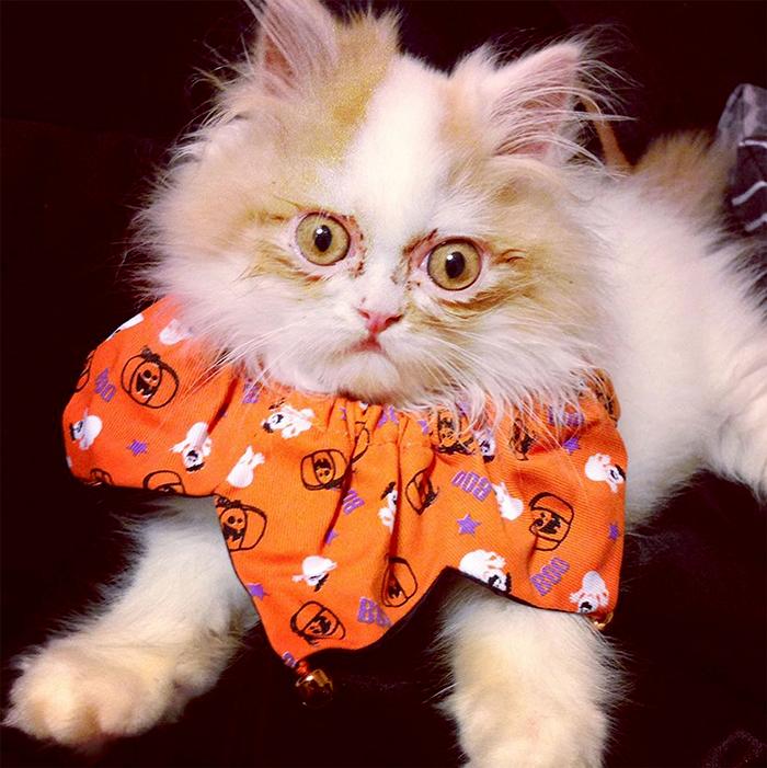 Internauci znaleźli godnego zastępcę nieżyjącego Grumpy Cat. Poznajcie Louisa: