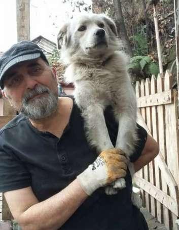 Zagubiony pies żyjący na ulicy nie może uwierzyć, że jego rodzina w końcu go odnalazła