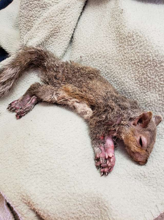 Gdy odnaleźli to stworzenie, nie mogli uwierzyć, że wciąż żyje. Jego historia to prawdziwy cud