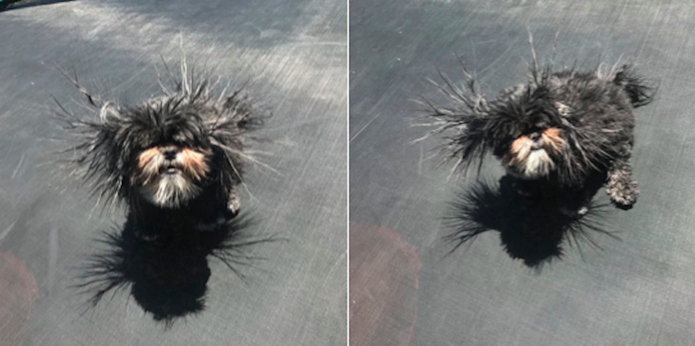 22 zdjęcia psów, które rozśmieszą nawet największego gbura