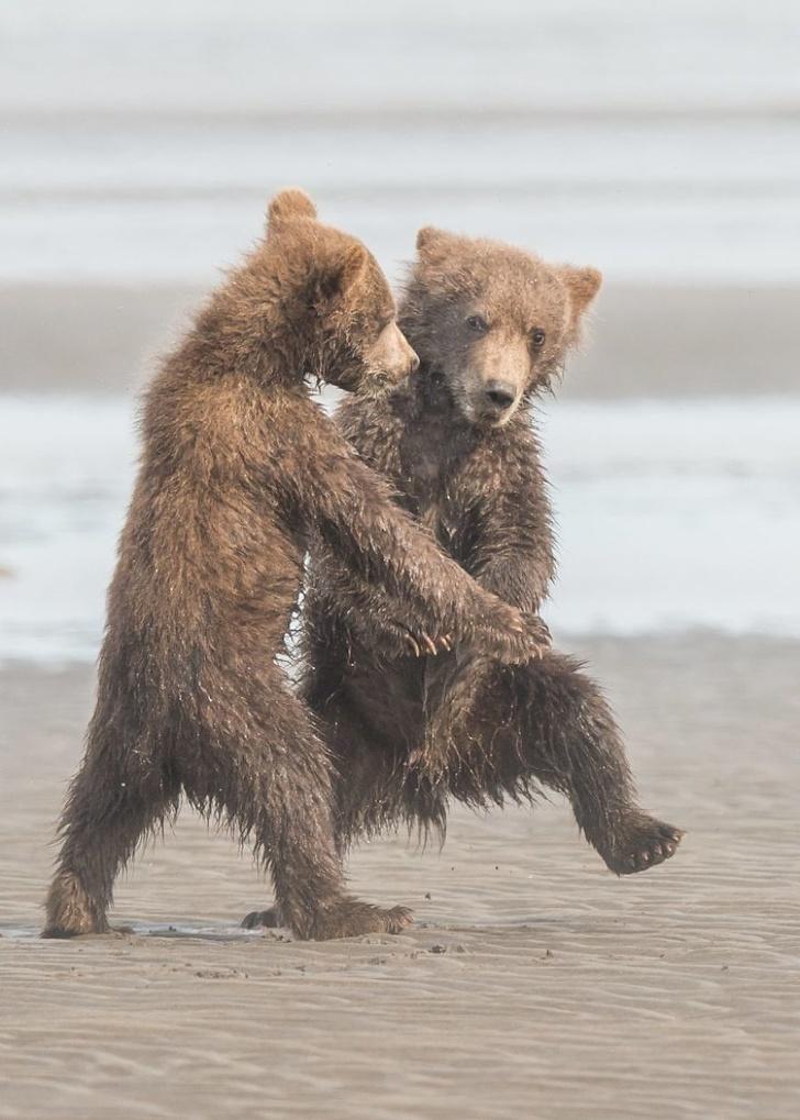 20 zdjęć dzikich zwierząt, które potrafią rozśmieszyć do rozpuku