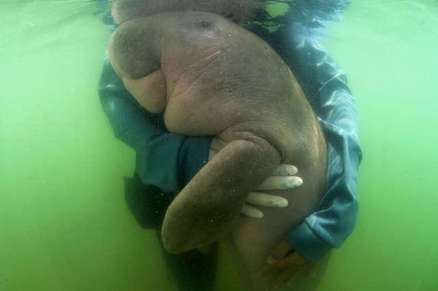 Malutki zwierzak morski przytula się do ludzi, którzy uratowali mu życie