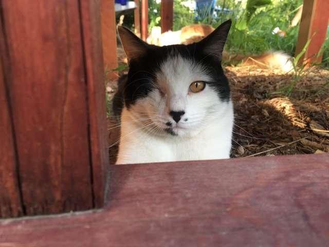 Domowy monitoring wykazał, co robi chłopiec z kotem swoich sąsiadów