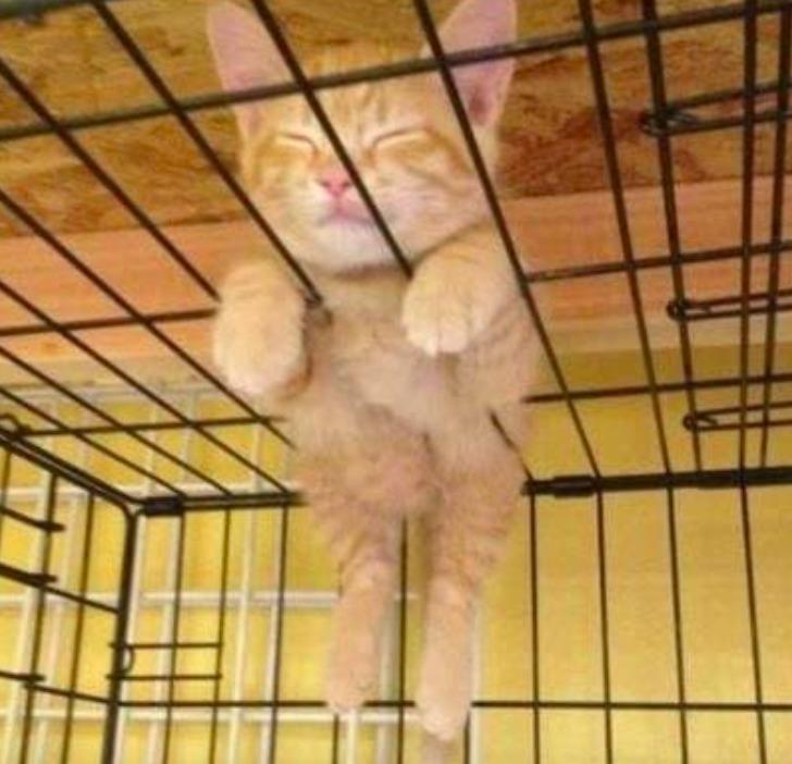 15 zdjęć, które udowadniają, że posłania dla kotów nie mają żadnego sensu