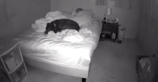 Kamera w pokoju uchwyciła, jak jej pies śpi w nocy