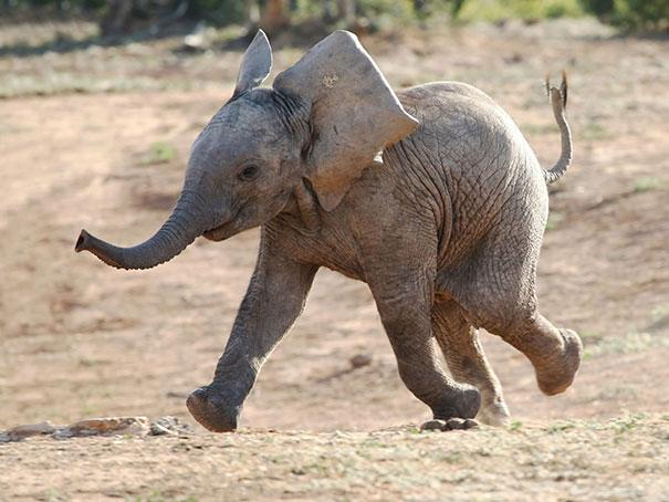 30 zdjęć szczęśliwych zwierząt, które od razu rozjaśnią twój dzień
