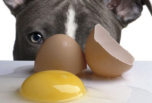 Czy pies może jeść surowe jajko