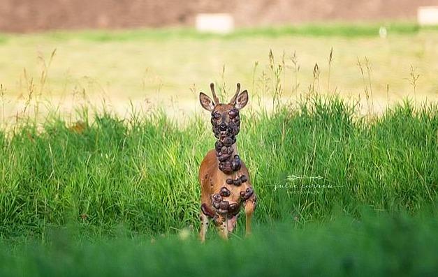 Do sieci trafiły szokujące zdjęcia jelenia. Jego widok przeraża