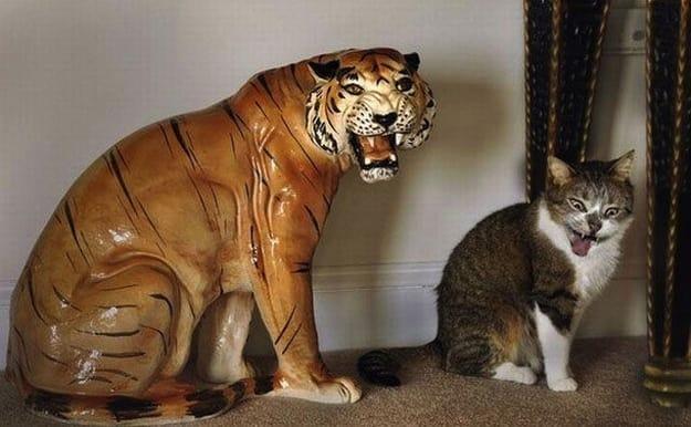 19 rozbrajających zdjęć kotów, które zostały pstryknięte w idealnym momencie