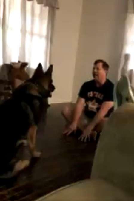 Ukryta kamera zdradziła, co robi pies, gdy jest sam w domu