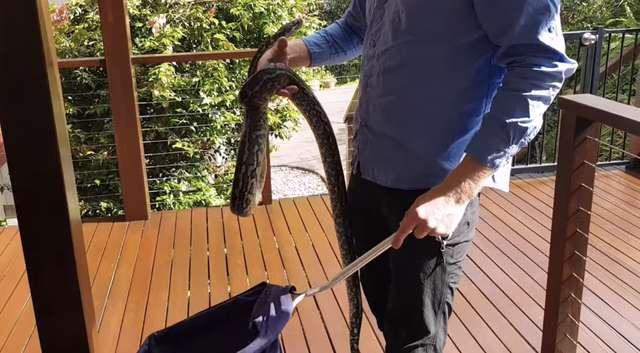 Nie miała pojęcia, że na jej tarasie znajduje się gigantyczny wąż. Potrafisz go dostrzec?