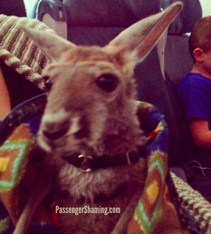 13 nietypowych zwierzaków wsparcia emocjonalnego, które ugoszczono na pokładach samolotów