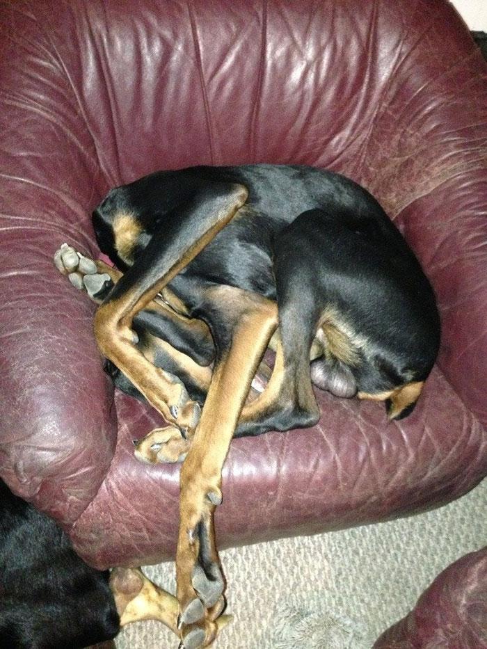 40+ razy, gdy psiaki zasnęły w wyjątkowo dziwnych pozycjach