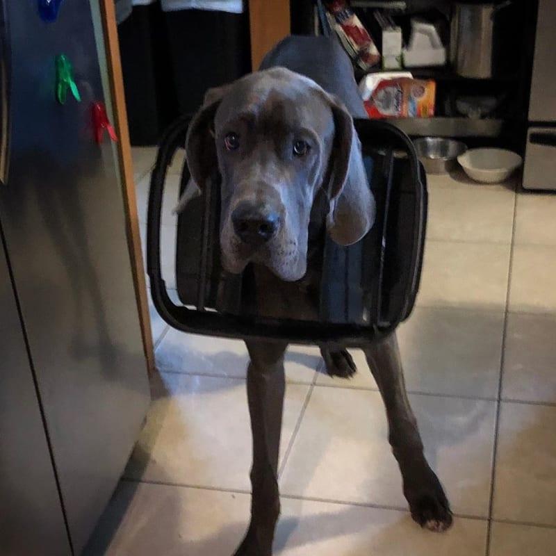 28 psów, które na 1000% są niewinne. Ich miny mówią wszystko