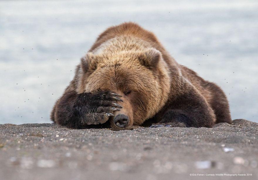 22 zdjęcia dzikich zwierząt, które rozbawią cię do rozpuku