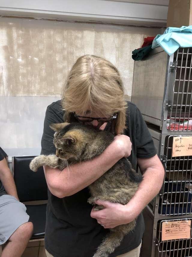 Po 11 latach kot ponownie jednoczy się ze swoją mamą