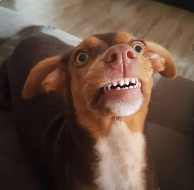 Babcia nie mogła znaleźć swojej sztucznej szczęki. Gdy spojrzała na psa, parsknęła śmiechem
