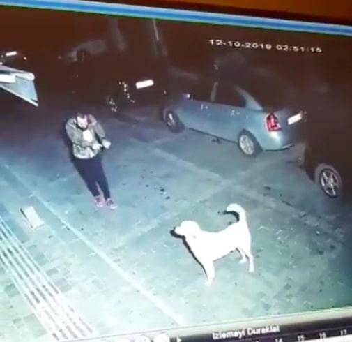 Uliczny monitoring zarejestrował w nocy nietypowe zachowanie mężczyzny i bezdomnego psa