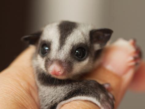 20 słodkich zwierzaków, o których istnieniu prawdopodobnie nie miałeś pojęcia