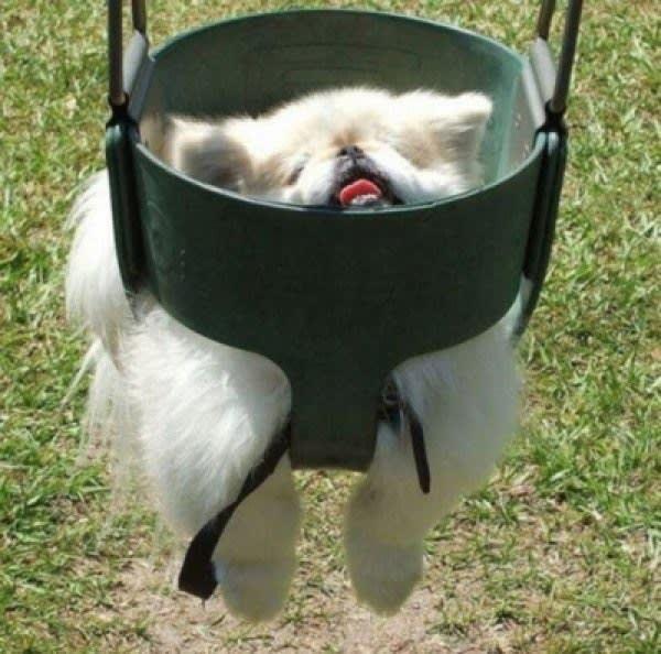 19 psów, które miały dziś niezłego pecha. Nie chciałbyś być w ich skórze!