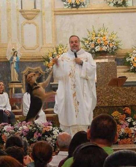 Ksiądz przyprowadza bezdomne psy na mszę, aby pomóc im znaleźć wymarzone domy