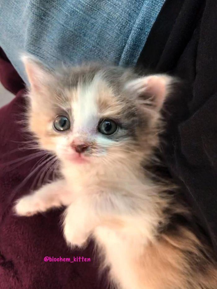 Przygarnęła 5-tygodniowego kotka. Odwdzięczył się uśmiechem, który rozczulił milion ludzi
