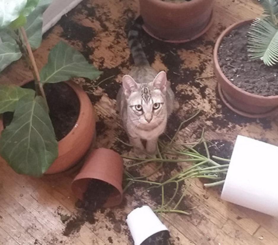 18 zabawnych zdjęć kotów, które dowodzą, że one nigdy się nie nudzą, nabierając ludzi