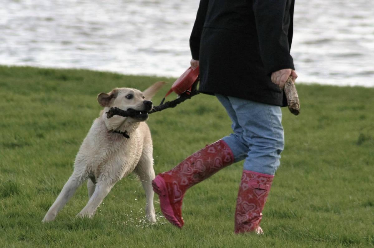 7 niezwykłych rzeczy, które potrafi wyczuć pies