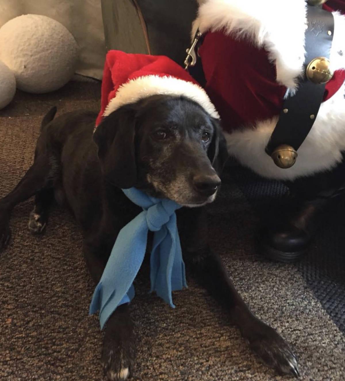 Przywiózł do kliniki 2 psy i zażądał ich uśpienia. Weterynarz nie mógł się zgodzić