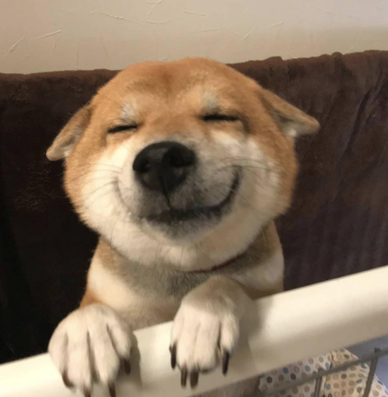 25 uroczych zdjęć, które sprawiają, że uśmiech pojawia się nawet w zły dzień
