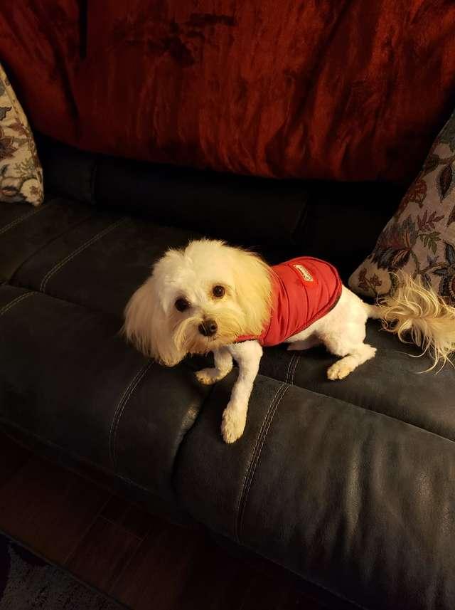 Przeszła obok swojego psa i nawet go nie zauważyła. Całkowicie wtopił się w dywan!