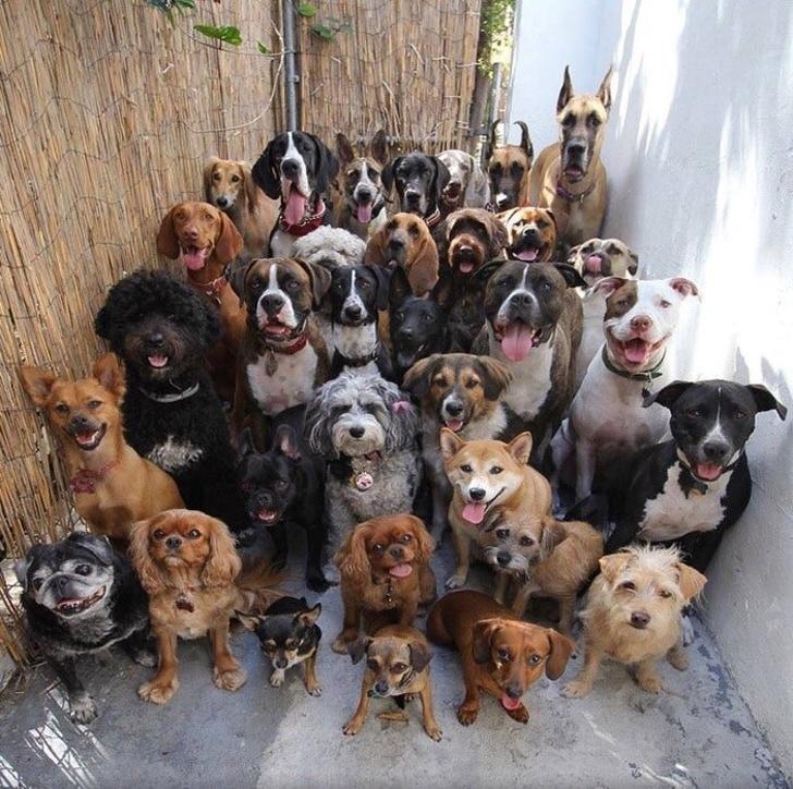 20 zdjęć zwierząt zrobionych w idealnym momencie. Nie daj się zwieść złudzeniu