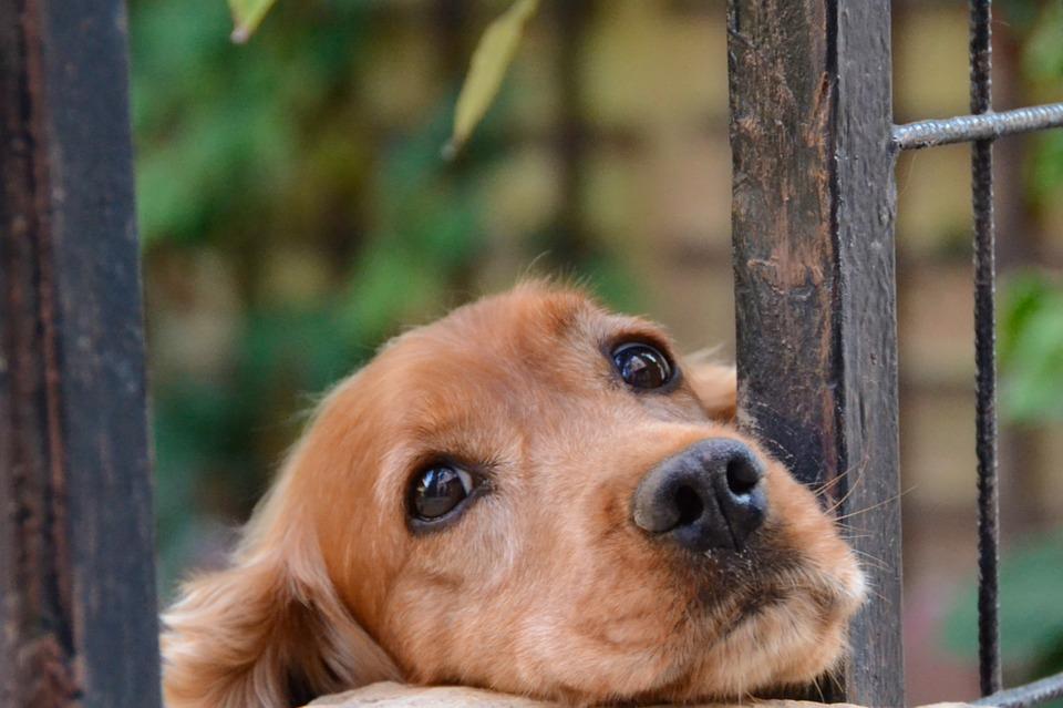 Nowy kalkulator wieku psa. Ile Twój pies ma lat w przeliczeniu na ludzkie?