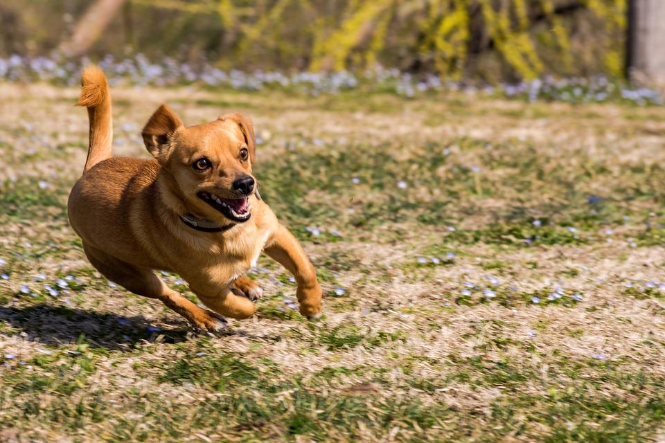 Jak obliczyć wiek psa?