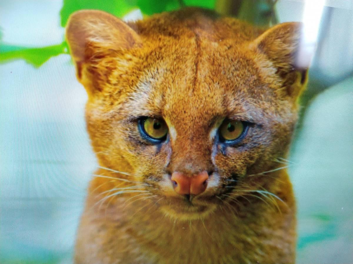 Była pewna, że w zaroślach znalazła urocze kocięta. Weterynarz wyprowadził ją z błędu