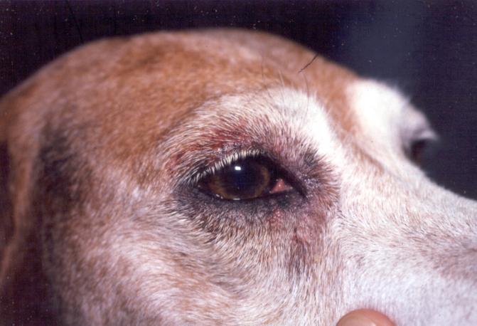 Już nigdy więcej nie krzykniesz na swojego psa, kiedy dowiesz się, jak to na niego wpływa